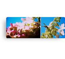 Cacophony of Colour Canvas Print