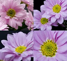 Flower Square by Michael Hadfield