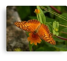 butterfly  - mariposa Canvas Print