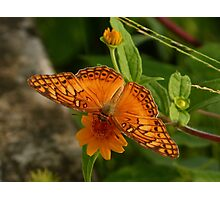 butterfly  - mariposa Photographic Print