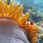 Sea anenome by James Hall