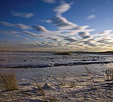 Great Marsh, Plum Island by ladygarbanzo