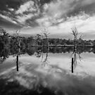 Banyule Flats  by Christine  Wilson Photography