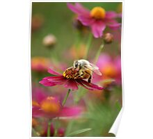 Bee on Maroon Poster
