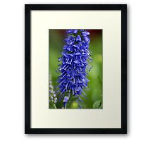 Blue Stalk Framed Print