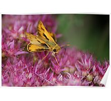 Skipper on Pink Poster