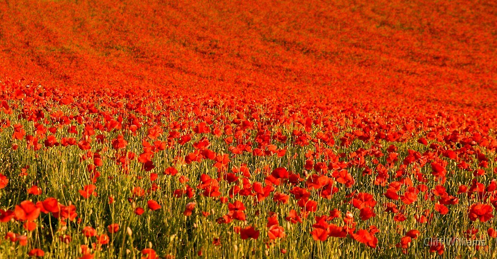 Mostly Red (viewed 130 times) by Cliff Williams