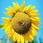Sunflower by Terry Greenwood