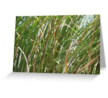 Dragonfly on  dune grass Greeting Card