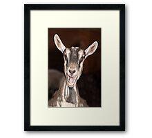 """""""I'm Baaaad"""" - goat has goofy expression Framed Print"""