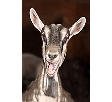"""I'm Baaaad"" - goat has goofy expression Photographic Print"