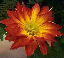 Flaming Beauty by Ginny York