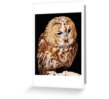 An Injured Owl in the World Bird Sanctuary Greeting Card
