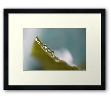 Climbing up a Leaf  - JUSTART © Framed Print