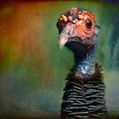 Portrait of an Occelated Turkey by alan shapiro