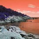 Tangerine Coastal Maine by Christy  Bruna