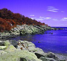 Purple Coastal Maine by Christy  Bruna