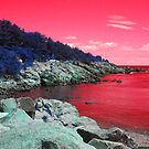 Red Coastal Maine by Christy  Bruna