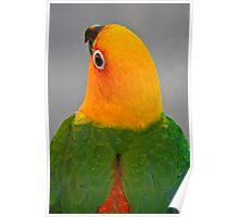 A Pretty Bird Poster