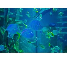 Aquarium Fish Photographic Print