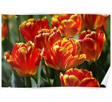 Red Tulip Garden Poster