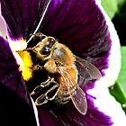 Bee in a Pansy by Brenda Boisvert