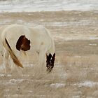 Prairie Camouflage, Montana horse photo by Donna Ridgway