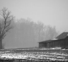 011811-91   WINTER FOG by MICKSPIXPHOTOS