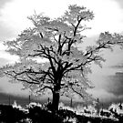 Winter Tree by the57man