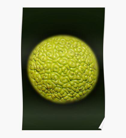 texture green Poster