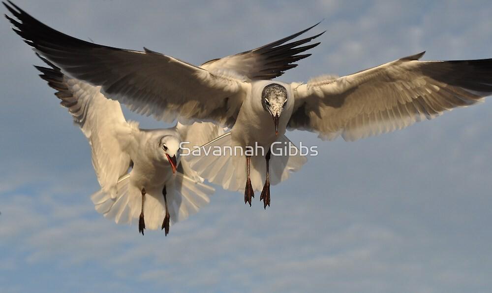 Seagulls in Flight by Savannah Gibbs