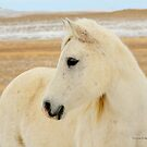 Winter Royalty, Montana horse photo by Donna Ridgway