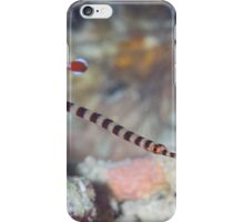 Naia Pipefish iPhone Case/Skin