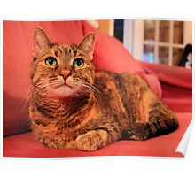 Cat laying down relaxing Poster