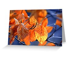 Fall Leaves with Blue Background Greeting Card