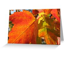 Maple Leaves in Fall Greeting Card