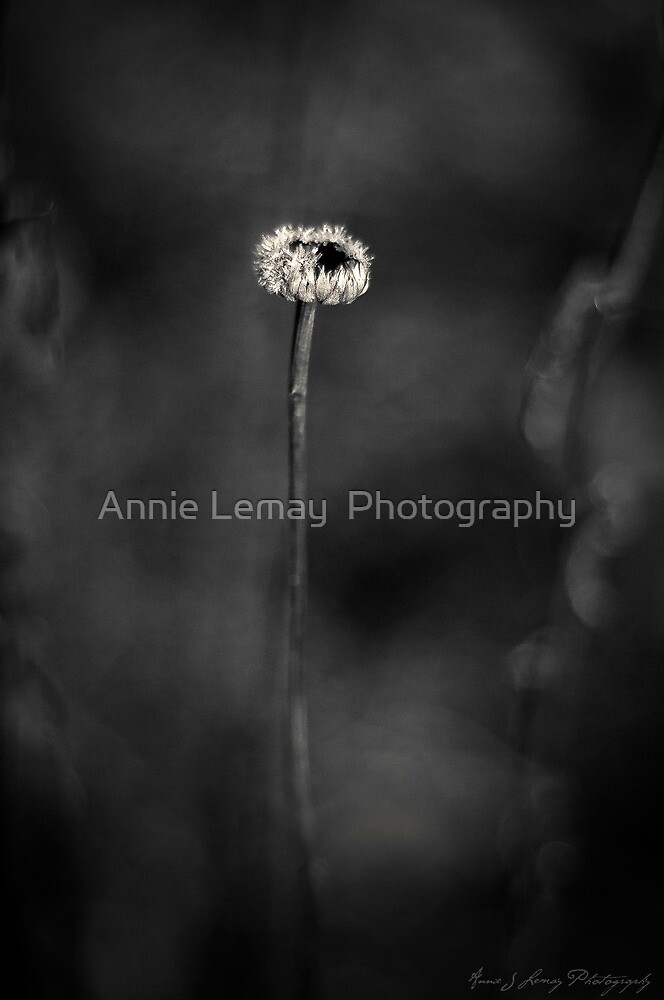 Frozen in Time by Annie Lemay  Photography