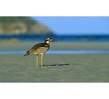 Beach Stone-curlew Photographic Print