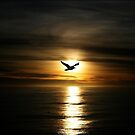 Skybird in Antarctica by John Dalkin