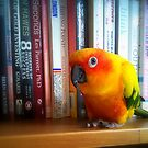 You&#x27;ve Got To Be Kidding Me! A Book By Les Parrott - Sun Conure - NZ by AndreaEL