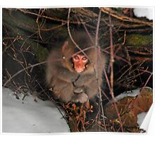 Baby Snow Monkey at Jigokudani Hot Springs Poster