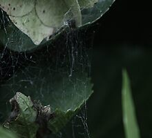 Home of the Eight Legged. by jessicacailin