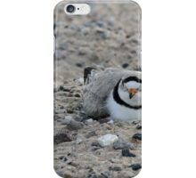 Piping Plover iPhone Case/Skin