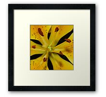 A Lily Close Up Framed Print