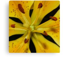 A Lily Close Up Canvas Print