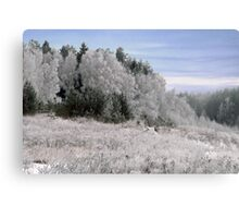 Frost in sunshine after cold night Canvas Print