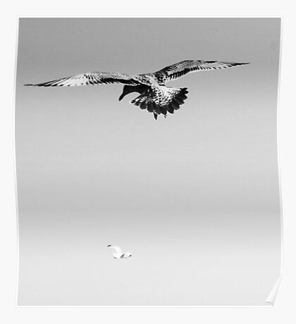 Flying birds  Poster