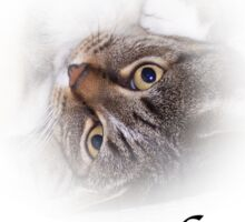 Cute Tabby Cat Purr...fect!  Sticker