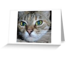 muzzle cat Greeting Card