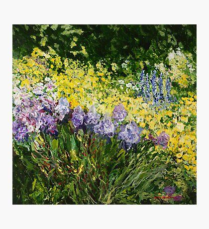Sunshine Blossoms Photographic Print